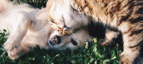 Photo of kitten and dog on grass